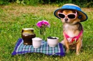 11693935-piccolo-cane-chihuahua-vestito-che-indossa-cappello-di-paglia-e-occhiali-relax-nel-prato