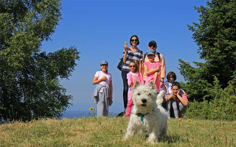 travel to italy with a dog
